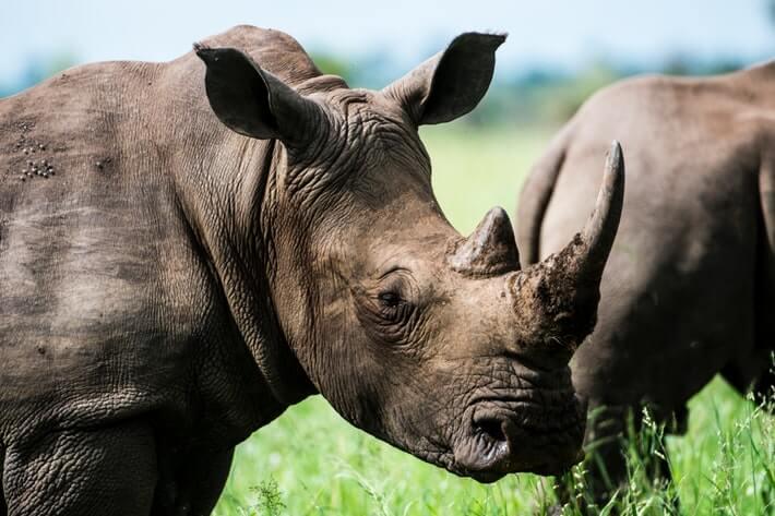 """Rhino Bonds"" Help With Wildlife Conservation Image"
