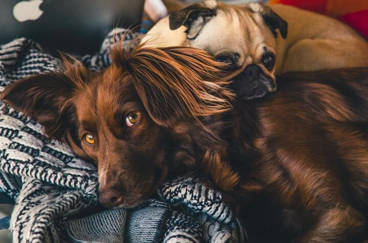 Wagmo Raises $12.5 Million for New Pet Insurance Offer Image